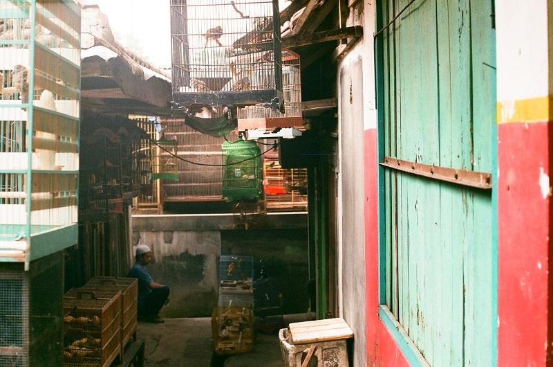 malang-bird-market-ptasi-targ-2jpg