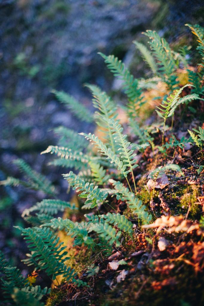 szwecja natura las