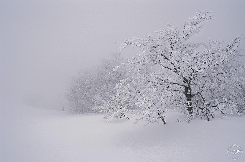 bieszczady-zimowe-jpg