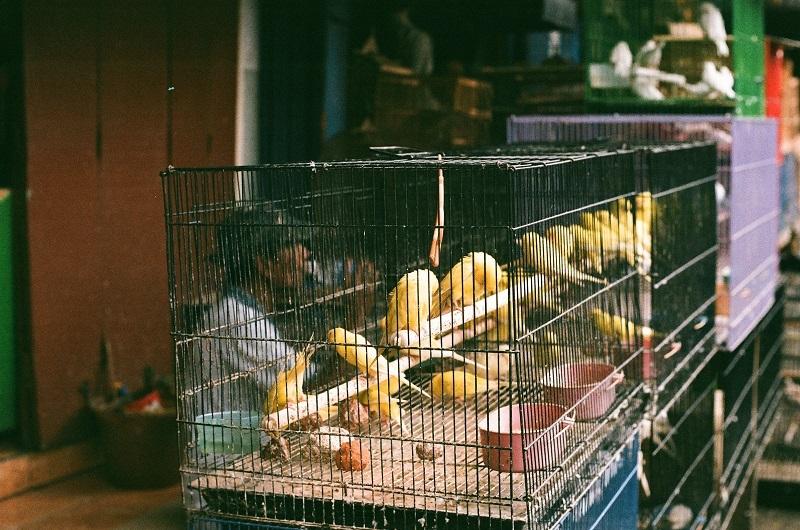 malang-bird-market-ptasi-targ-jpg
